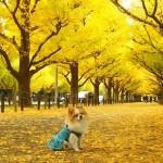 第17回神宮外苑いちょう祭り|東京イベント