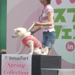 ☆いぬのきもちフェスタ2014 in Venus Fort|東京イベント